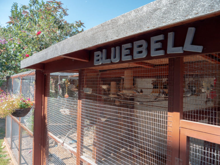 Bluebell Nursing Home beautiful garden